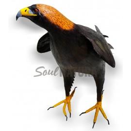 Águila-Real-SoulNatura
