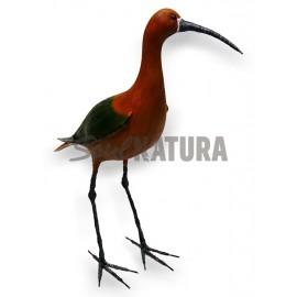 MORITO (Plegadis falcinellus) Pájaro de PITA