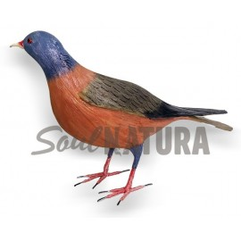 PALOMA TURQUÉ (Columba bollii) Pájaro de PITA