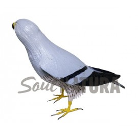 AGUILUCHO CENIZO (Circus pygargus) Pájaro de PITA