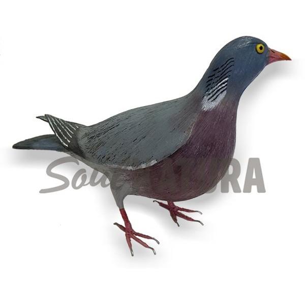 PALOMA TORCAZ (Columba palumbus) Pájaro de PITA