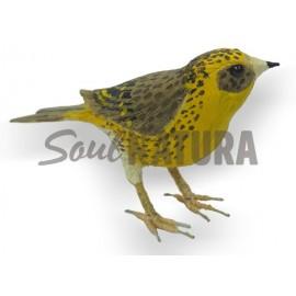VERDECILLO (Serinus serinus) Pájaro de PITA