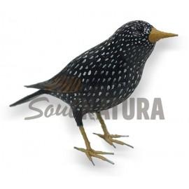 ESTORNINO PINTO (Sturnus vulgaris) Pájaro de PITA