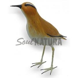 CORREDOR SAHARIANO (Cursorius cursor) Pájaro de PITA