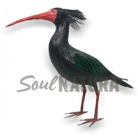 IBIS EREMITA (Geronticus eremita) Pájaro de PITA