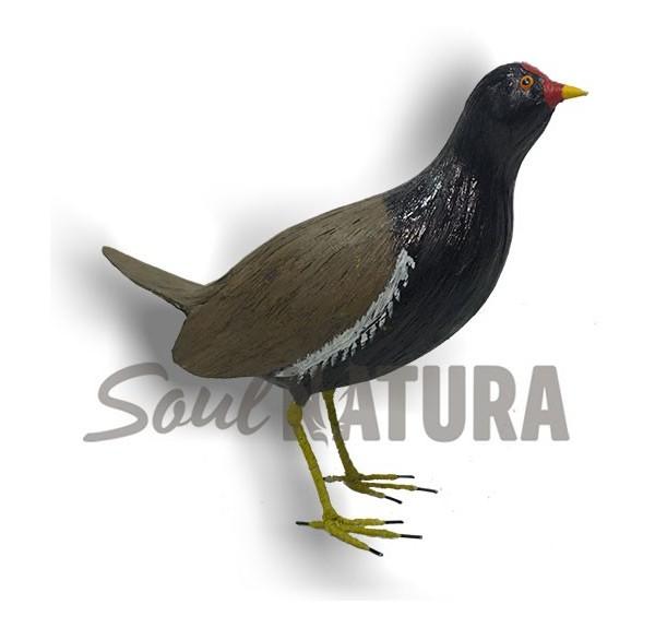 GALLINETA COMÚN (Gallinula chloropus) Pájaro de PITA
