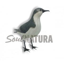 PARDELA PICHONETA (Puffinus puffinus) Pájaro de PITA