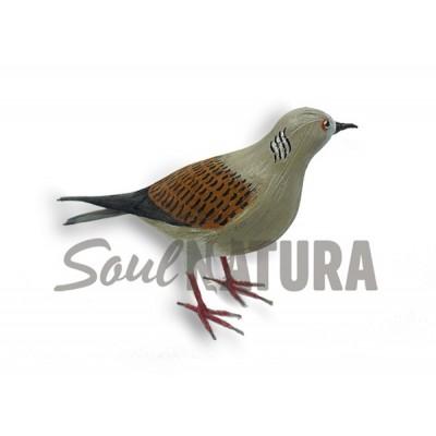 TÓRTOLA EUROPEA Pájaro de PITA