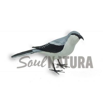 ALCAUDÓN REAL (Lanius meridionalis) Pájaro de PITA