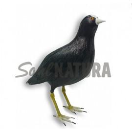 FOCHA COMÚN (Fulica atra) Pájaro de PITA