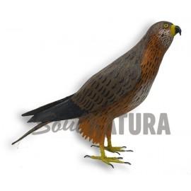 BUSARDO RATONERO Pájaro de PITA