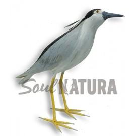 MARTINETE (Nycticorax nycticorax) Pájaro de PITA