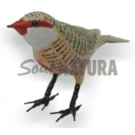 PICO DE CORAL (Estrilda astrild) Pájaro de PITA