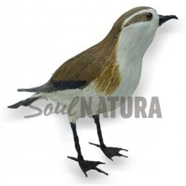 PAÍÑO PECHIALBO (Pelagodroma marina) Pájaro de PITA