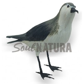 PARDELA CHICA (Puffinus assimilis) Pájaro de PITA